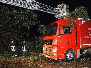 Sturm im Hochschwarzwald: Wie der Brummifahrer den Baumeinschlag erlebt hat