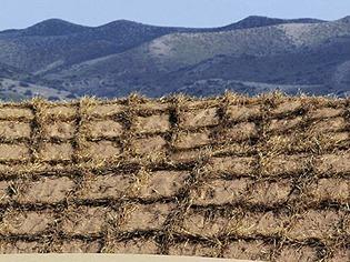 Trotz kargem Boden: Bio-Landwirtschaft in der Sahelzone