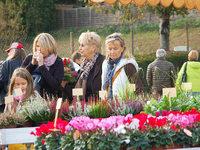 Fotos: Rheinfelder Bauernmarkt