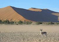 Bildvortrag von Gertraud Kinne über das südliche Afrika