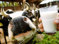 Aldi senkt den Milchpreis – Landwirte bereitet das Sorgen