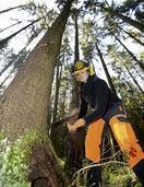Grüne fordern neues Gesetz zum Forstbetrieb im Land