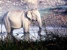 Elefanten in Indien: Warnung per SMS
