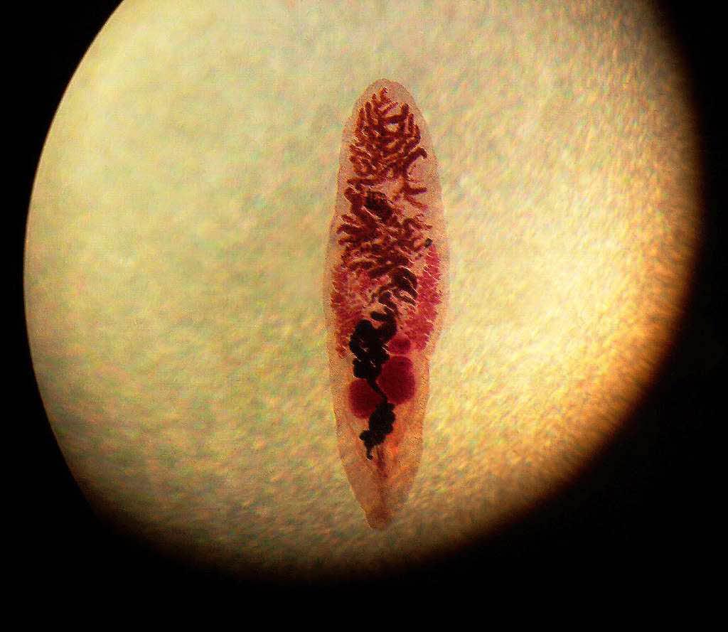 Wie sich die Welpen bei den Würmern benehmen