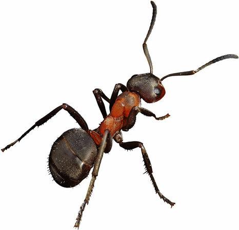 insekten als m llabfuhr panorama badische zeitung. Black Bedroom Furniture Sets. Home Design Ideas