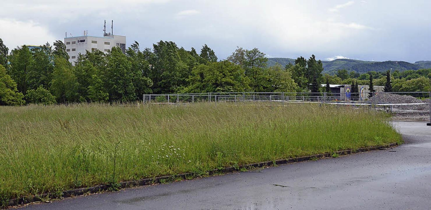 Blick über den BASF-Perimeter der Kesslergrube   | Foto: Ralf H. Dorweiler