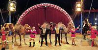 Manege frei für den Weihnachtszirkus in Waldshut-Tiengen