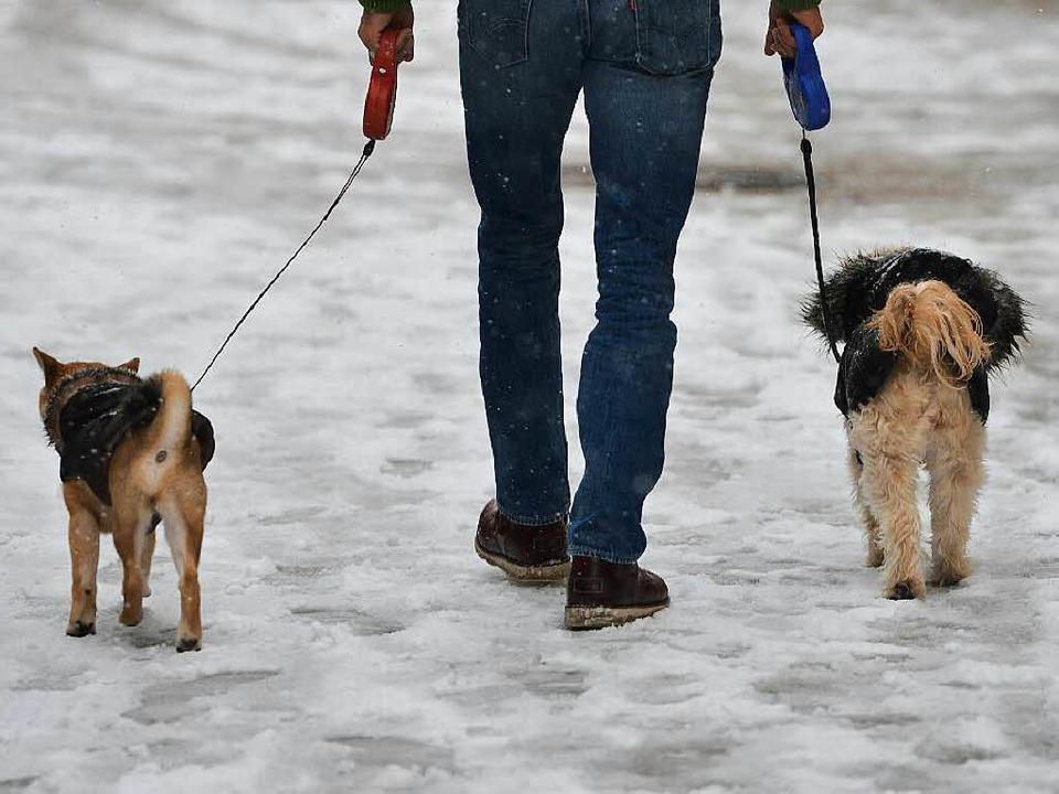 Entweder auf vier Pfoten, oder mit pas...werk: Schneeglätte kann tückisch sein.  | Foto: dpa