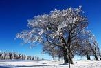 Fotos: Winterzauber auf dem Schauinsland