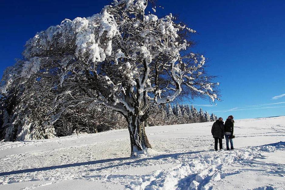 Das Jahr legte einen Bilderbuchstart hin. Zumindest auf den Bergen, wie hier auf dem Schauinsland, gab's am Neujahrstag reichlich Schnee und Sonne pur. (Foto: Markus Donner)