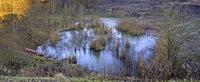Zwei Aussichtsplattformen kommen - das Biotop Tongrube wird f�r Naturfreunde erschlossen
