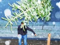 Christbaumwerfen - bizarres Ende der Weihnachtszeit