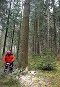Bundeskartellbehörde kündigt Kompromiss zur Forstvermarktung auf