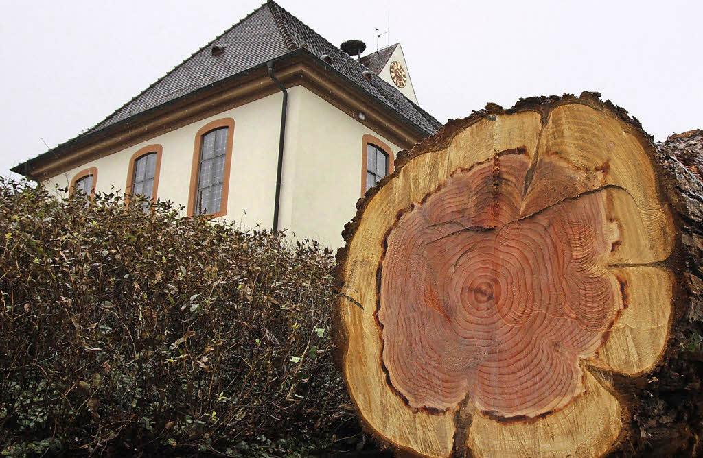 warum wurde der mammutbaum vor der evangelischen kirche gef llt gundelfingen badische zeitung. Black Bedroom Furniture Sets. Home Design Ideas
