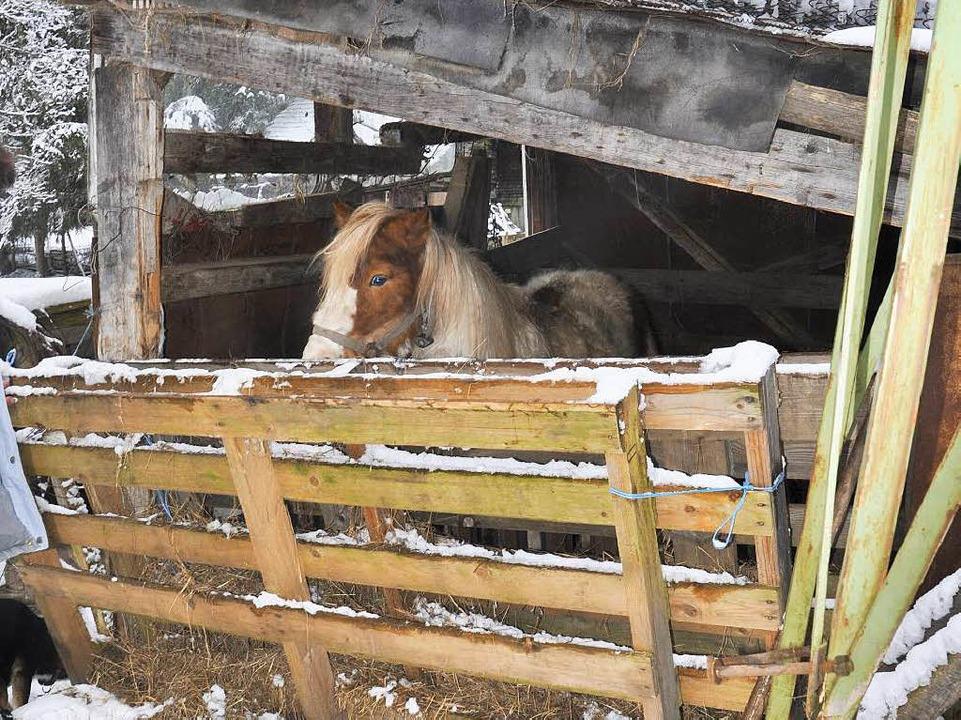 Dieses Pony nannten die Kinder, die fr...r isoliert in einem Bretterverschlag.   | Foto: Tierschutzverein Löffingen