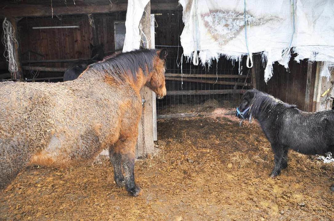 Die Tiere sind in erkennbar schlechtem Zustand.  | Foto: Tierschutzverein Löffingen