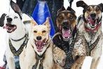 Schlittenhunderennen-WM in Todtmoss