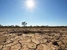 Australien: Viehz�chter verzweifeln an der D�rre