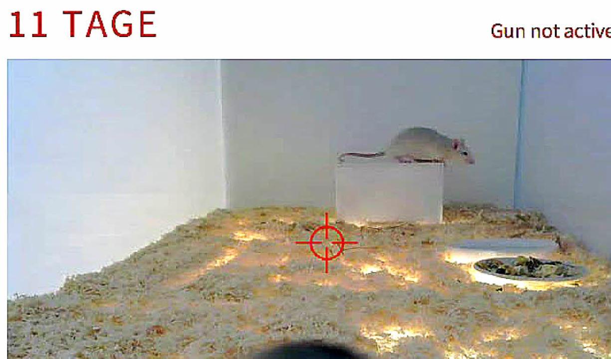 Screenshot von 11tage.florianmehnert.de  | Foto: privat