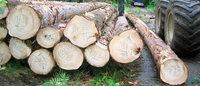 Holzvermarktung im Verbund?