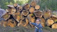 Die Geldquelle Wald sprudelt weiter