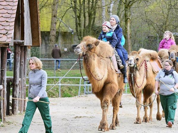 Kinder und Tiere ... eine super Kombination