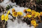 Fotos: Der Winter sagt dem Dreisamtal ade