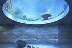 Fotos: So soll das Ozeanium im Zoo Basel aussehen
