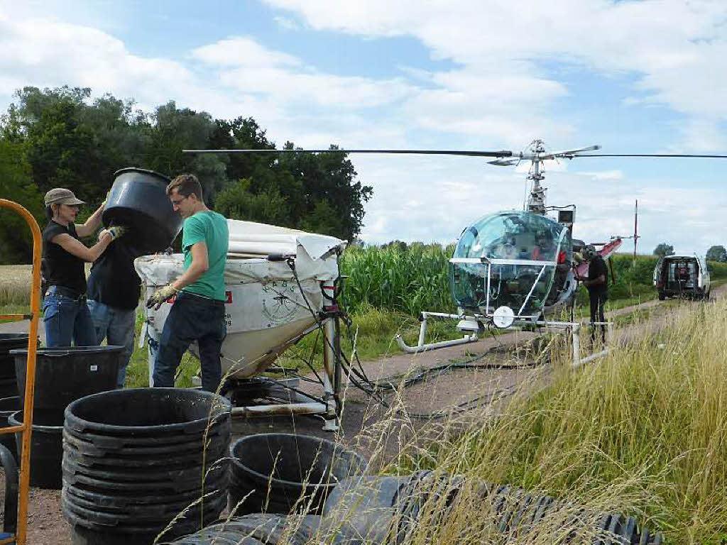 Zweifel an mittel gegen stechmuckenplage sudwest for Mittel gegen blasenschw che