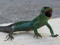 Aus einer M�lldeponie wird Lebensraum f�r Reptilien