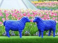 Badenweiler: Schafe als Friedensbotschafter