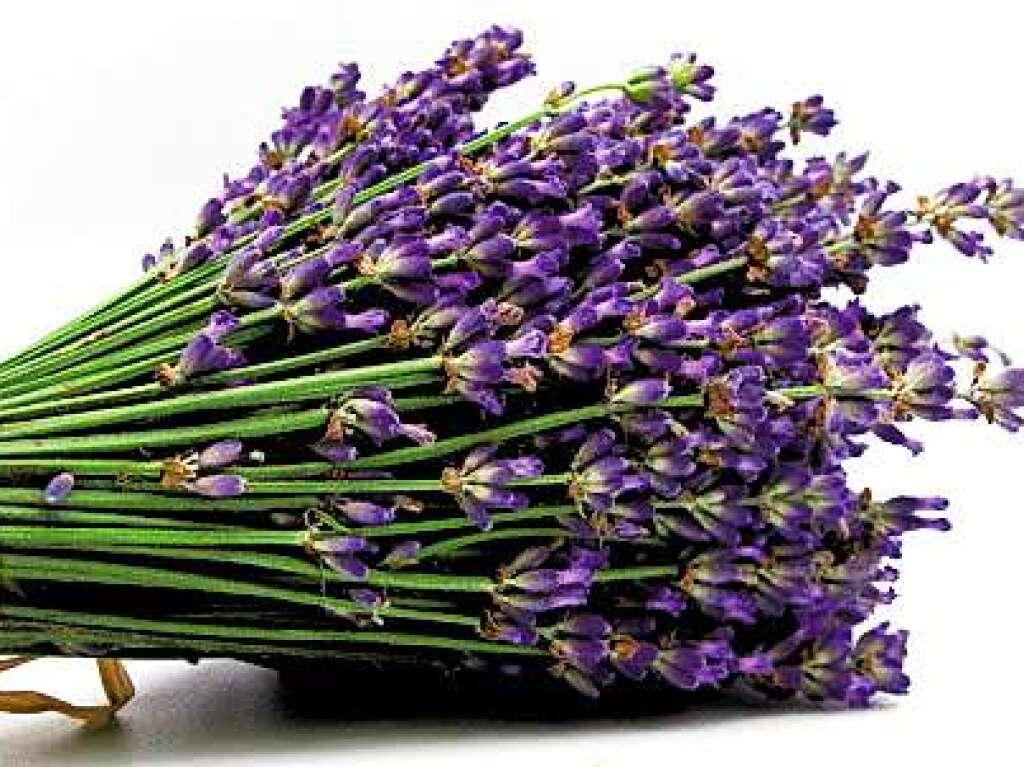 gesundheit ern hrung achtung pflanze der lavendel wirkt auch als liebestrank badische. Black Bedroom Furniture Sets. Home Design Ideas