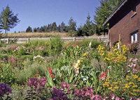 Bauerngärten – blühende Tradition und Vielfalt