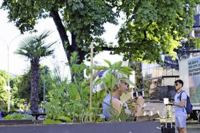 So funktioniert Urban Gardening in Freiburg