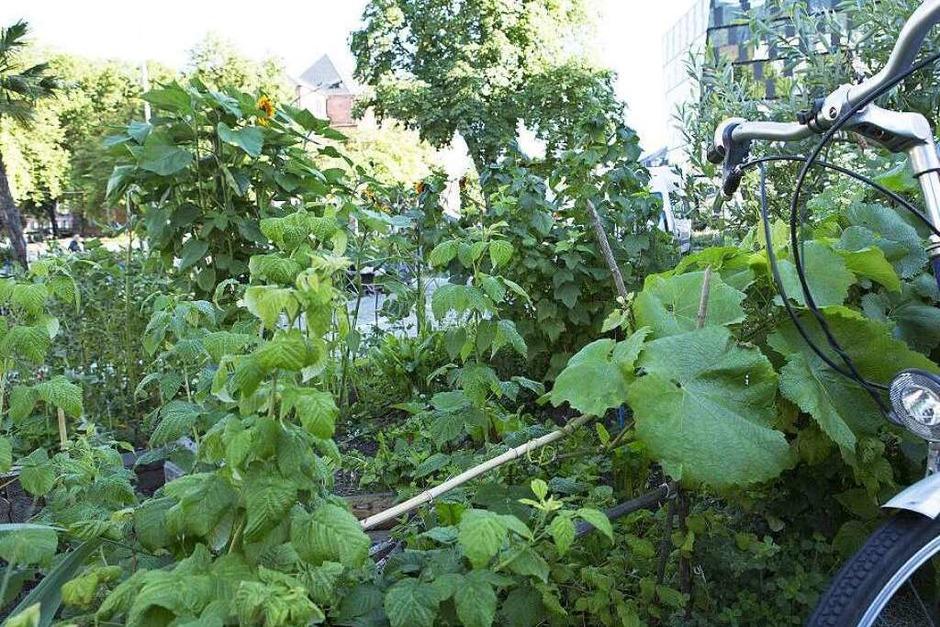 Beete für alle – so kann Urban Gardening aussehen. (Foto: Regula Wolf)