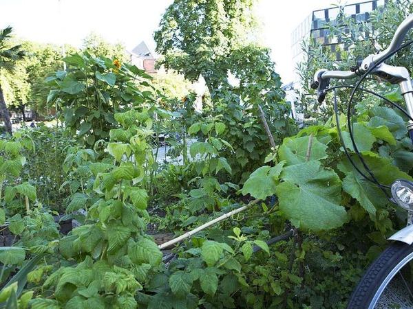 Beete für alle - so kann Urban Gardening aussehen.