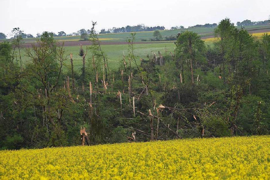 Bäume knickten ab wie Streichhölzer (Foto: Konrad Benitz)