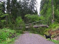 Tornado richtet zwischen Feldberg und B�rental schwere Sch�den an