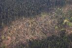 Fotos: Folgen des Tornados bei Bonndorf