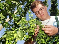 Freiburger Brauerei Ganter baut Hopfen im Dreisamtal an