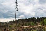 Fotos: Tornado bei Bonndorf – die Verw�stungen im Wald