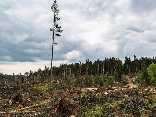 Bei Bonndorf hat der Tornado am 13. Mai 2015 seine gewaltigen Spuren im Wald hinterlassen.