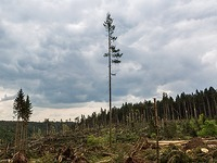 Fotos: Tornado bei Bonndorf - die Verw�stungen im Wald