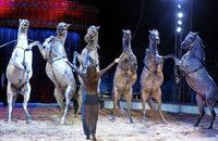 Circus Carl Busch gastiert mit Tieren, Clowns und Akrobaten in Kehl