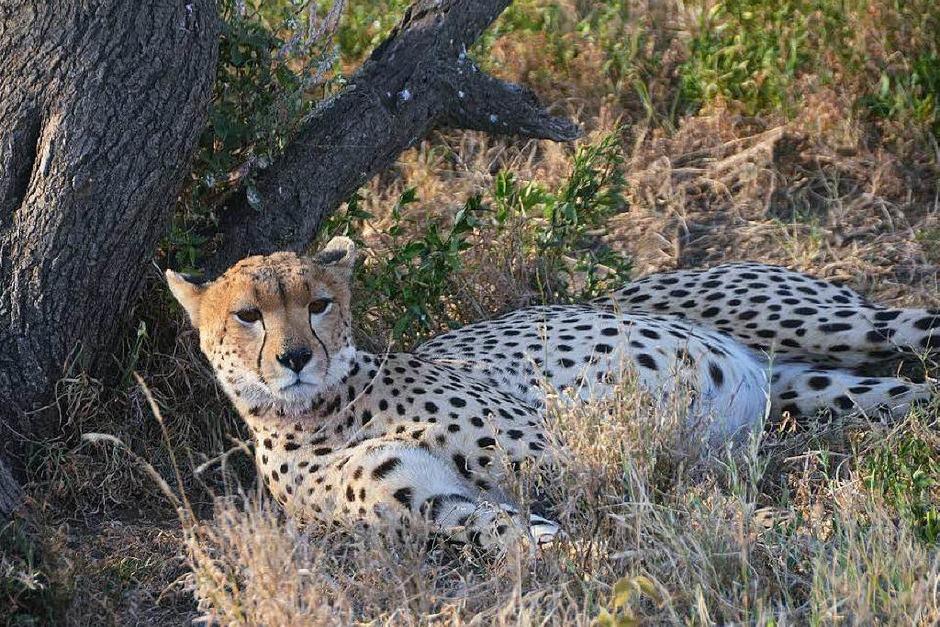 """Die Serengeti gehört zum Unesco-Weltnaturerbe. Die Massai waren es, die  die Savanne einst """"Serengetu"""", die endlose Ebene, nannten. (Foto: Susanne Ehmann)"""