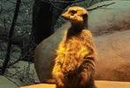 Fotos: Zisch-Aktionstag im Basler Zoo