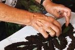 Fotos: Wie werden Blumenteppiche gelegt
