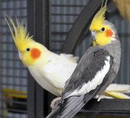 Vögel - unterhaltsamer als jede Seifenoper