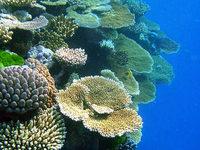 Spur des Verderbens: Ein Sachbuch zum Artensterben