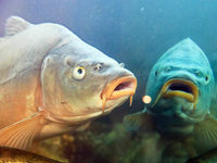 Fische haben unterschiedliche Pers�nlichkeiten
